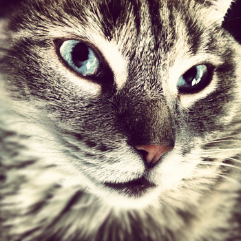 cat-closeup